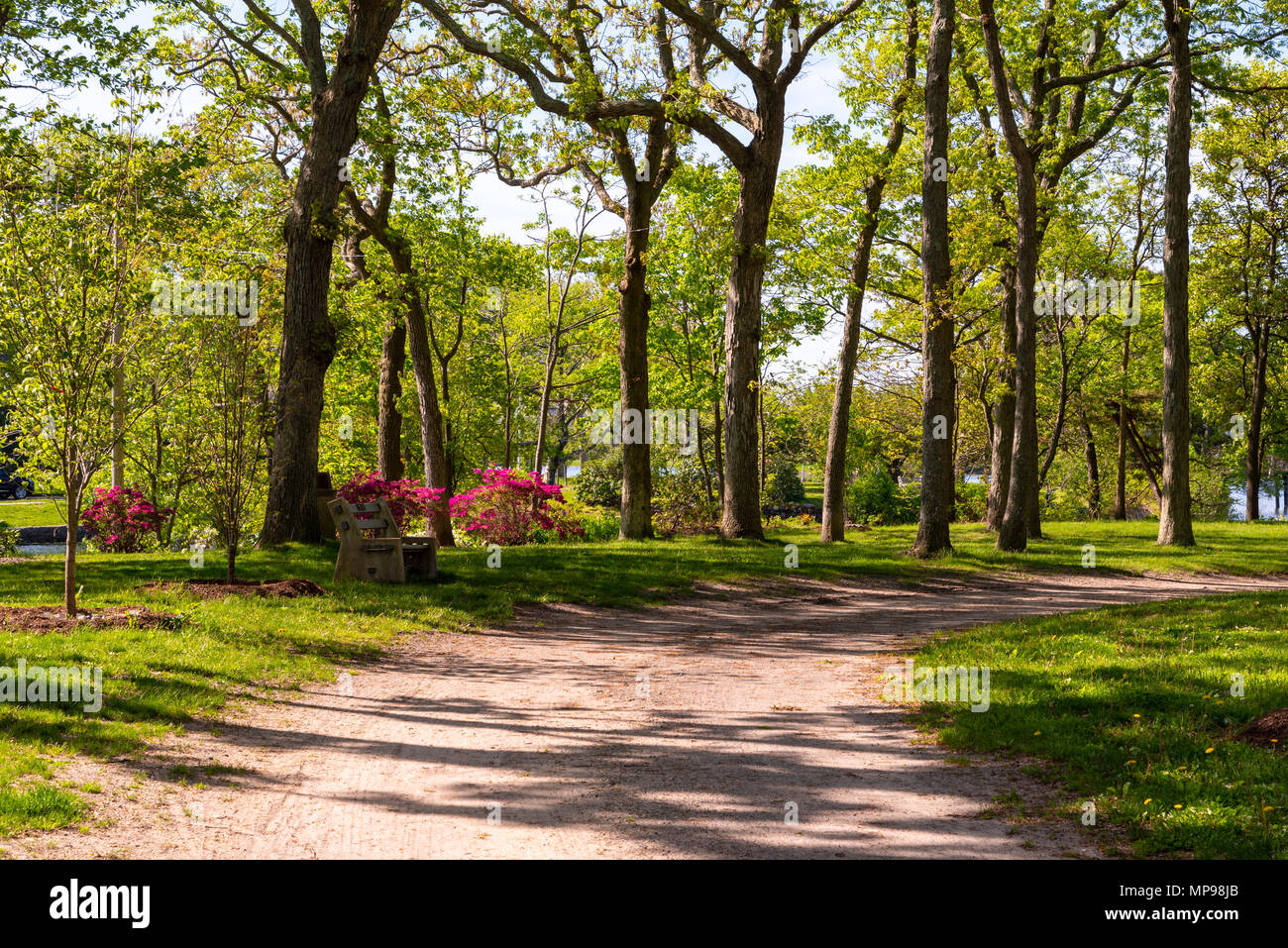 A Hiking Path Among Flowers And Trees In Divine Park Spring Lake