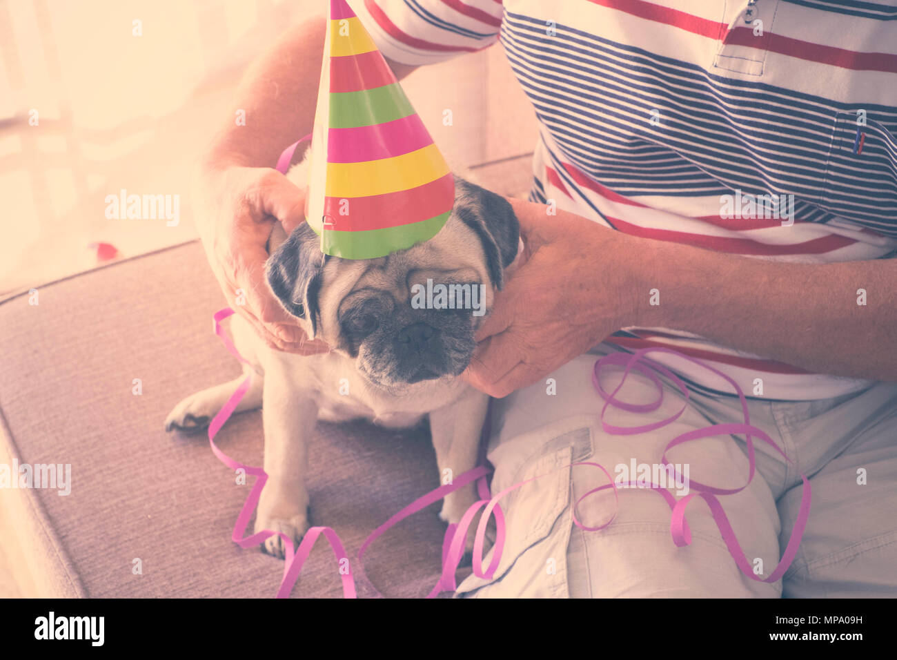 Masked pug puppy with colorful cap and streamers. Sitting on the couch together with his old master - Stock Image