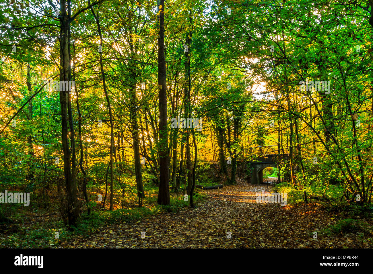 A bridge at Baggeridge Country Park in the West Midlands. - Stock Image