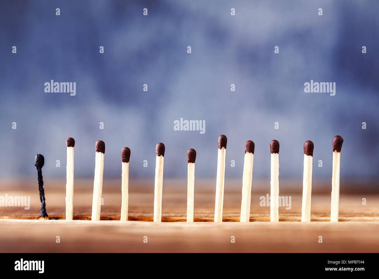 a row of matches on a wooden background, the last match burned down. Extinct match next to unlit - Stock Image