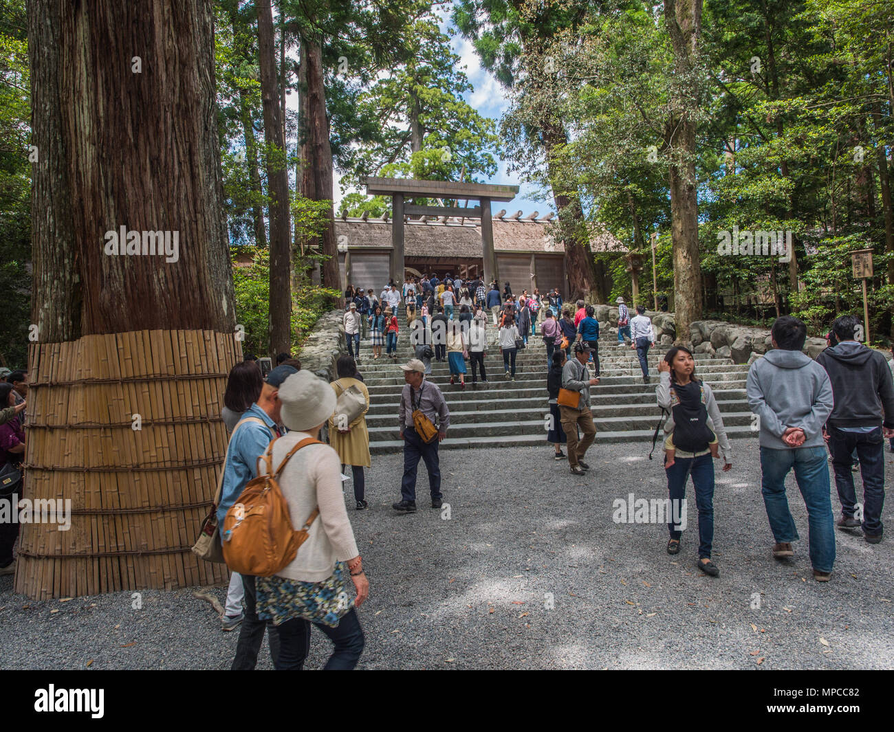 Stairs to Goshoden main sanctuary crowded with visitors come to pray, Naiku, Ise Jingu, Mie, Japan - Stock Image
