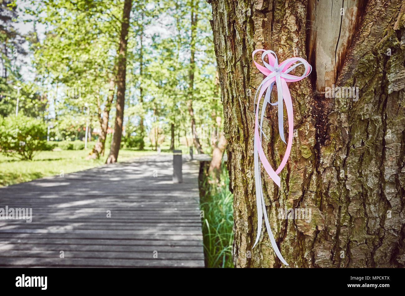 White and pink ribbon on a tree in a park, awareness symbol, selective focus. - Stock Image