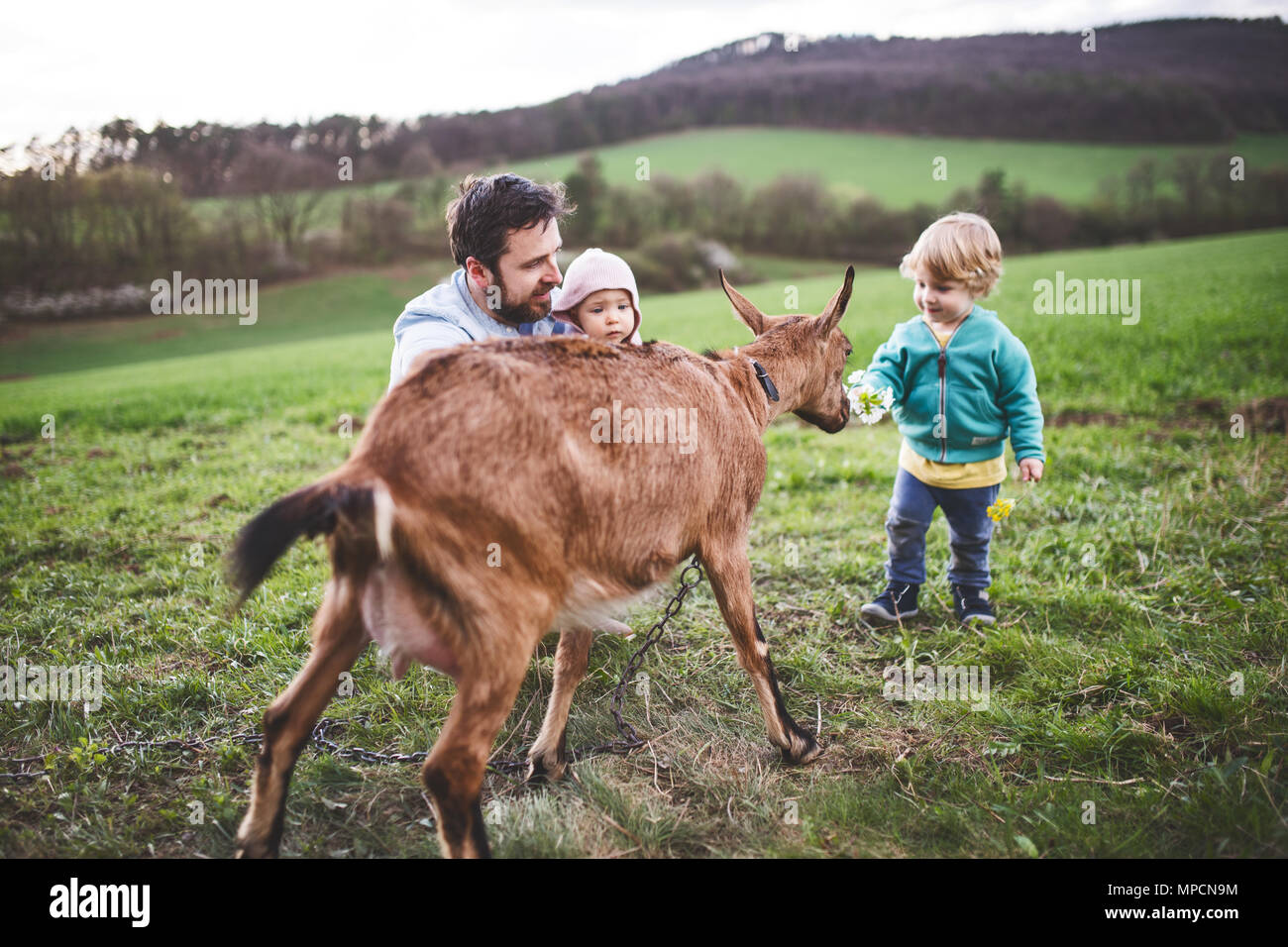 A father and his toddler children with a goat outside in spring nature. Stock Photo