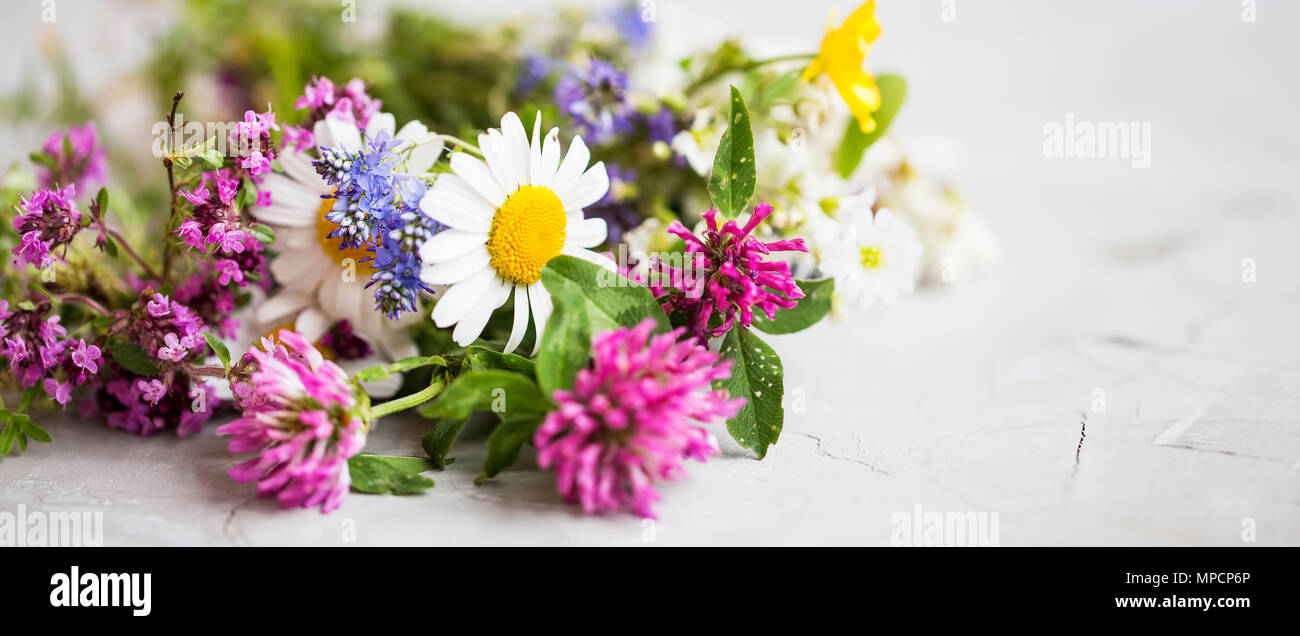 Healing herbs. Medicinal plants and flowers bouquet with mint ...