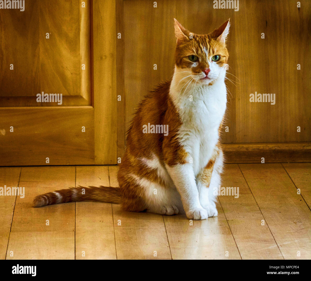 This feline was just thinking of what to do next. - Stock Image