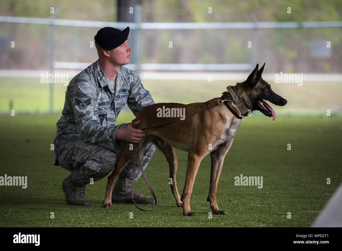 Military Working Dog Program Stock Photos Military Working Dog
