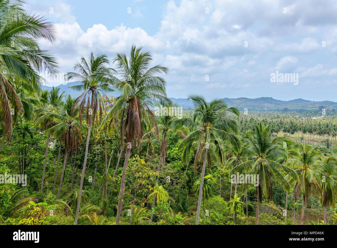 Koh Samui - Stock Image