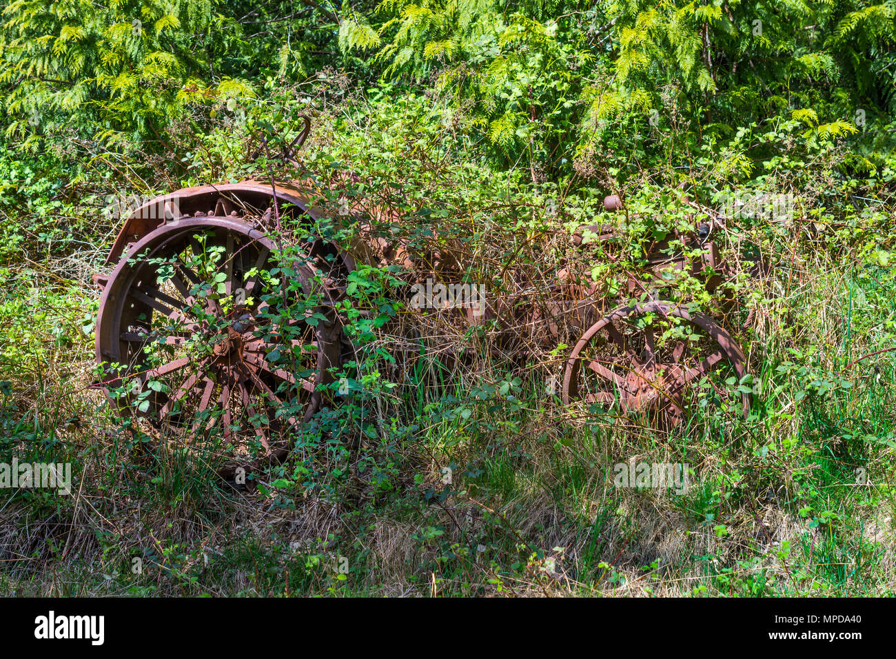 Rusty vintage Fordson tractor, Hornby Island, BC, Canada. - Stock Image
