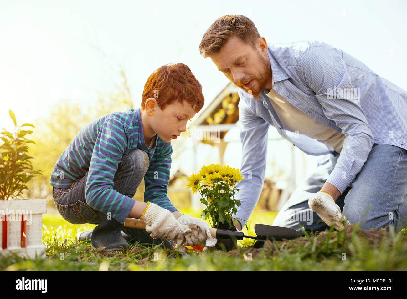 Delighted nice boy helping his father - Stock Image