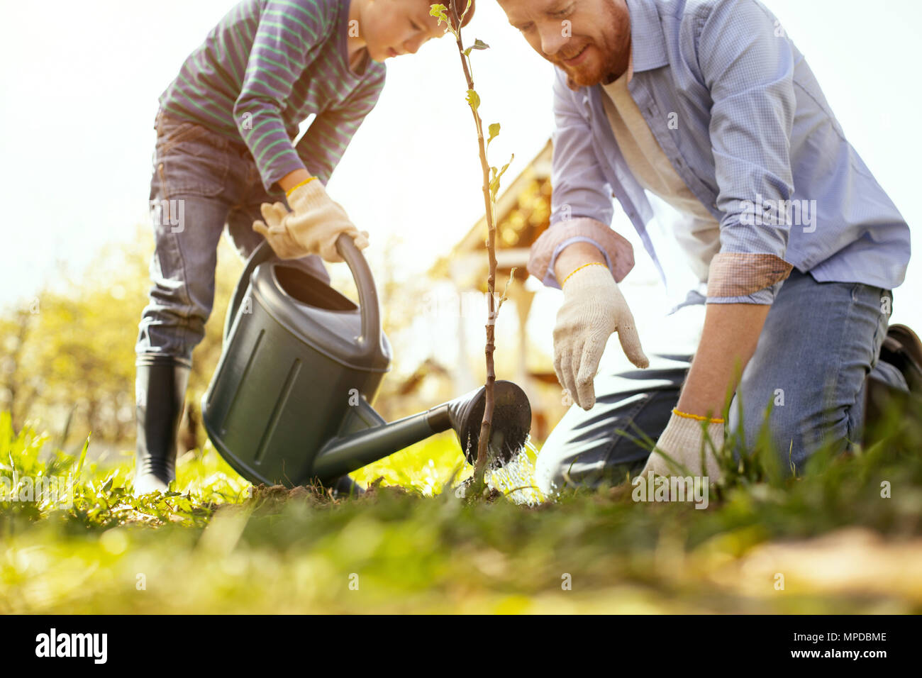 Father and son watering the tree - Stock Image