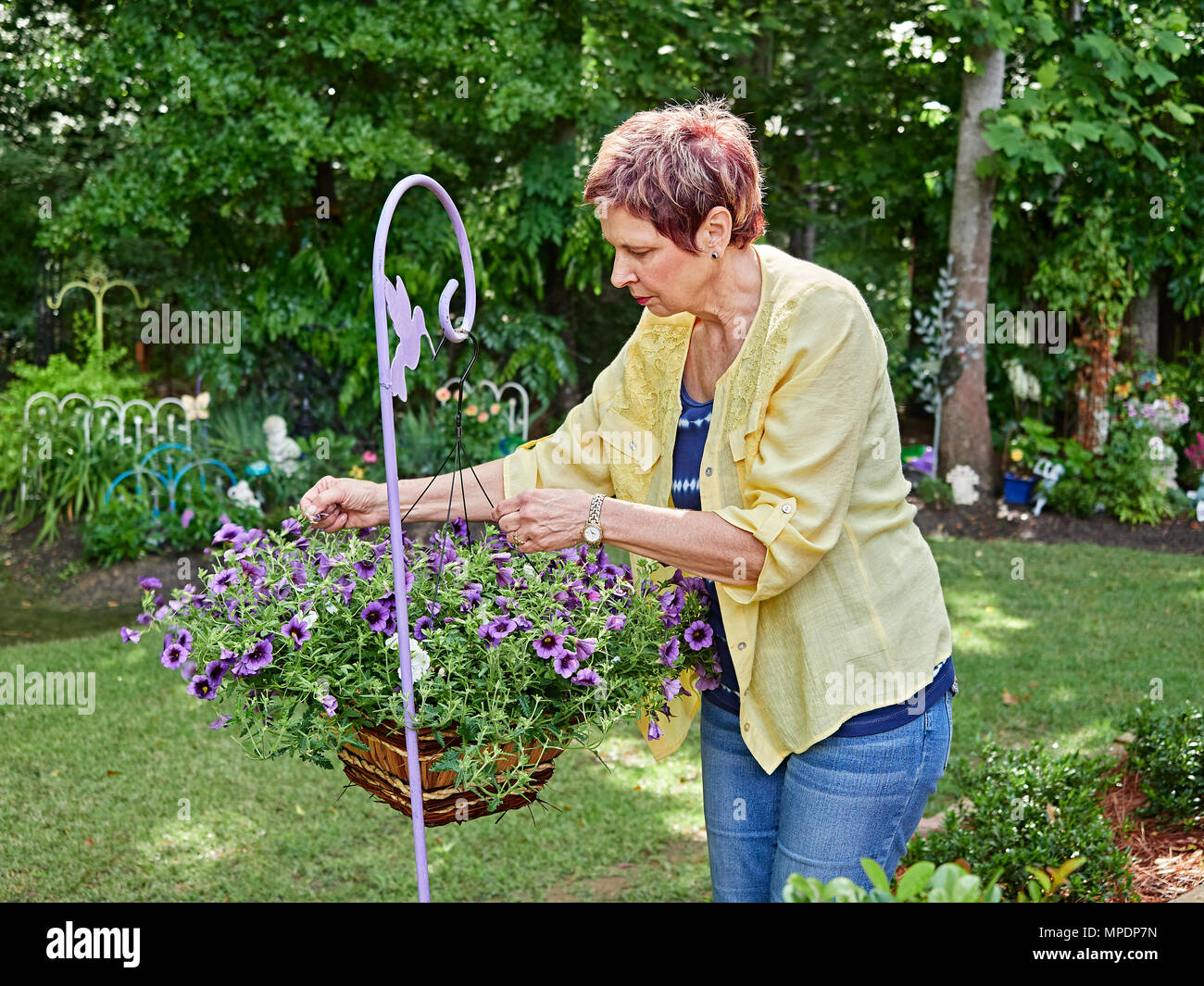 Mature woman gardener tending to her colorful hanging plant full of purple flowers, all part of her garden. - Stock Image
