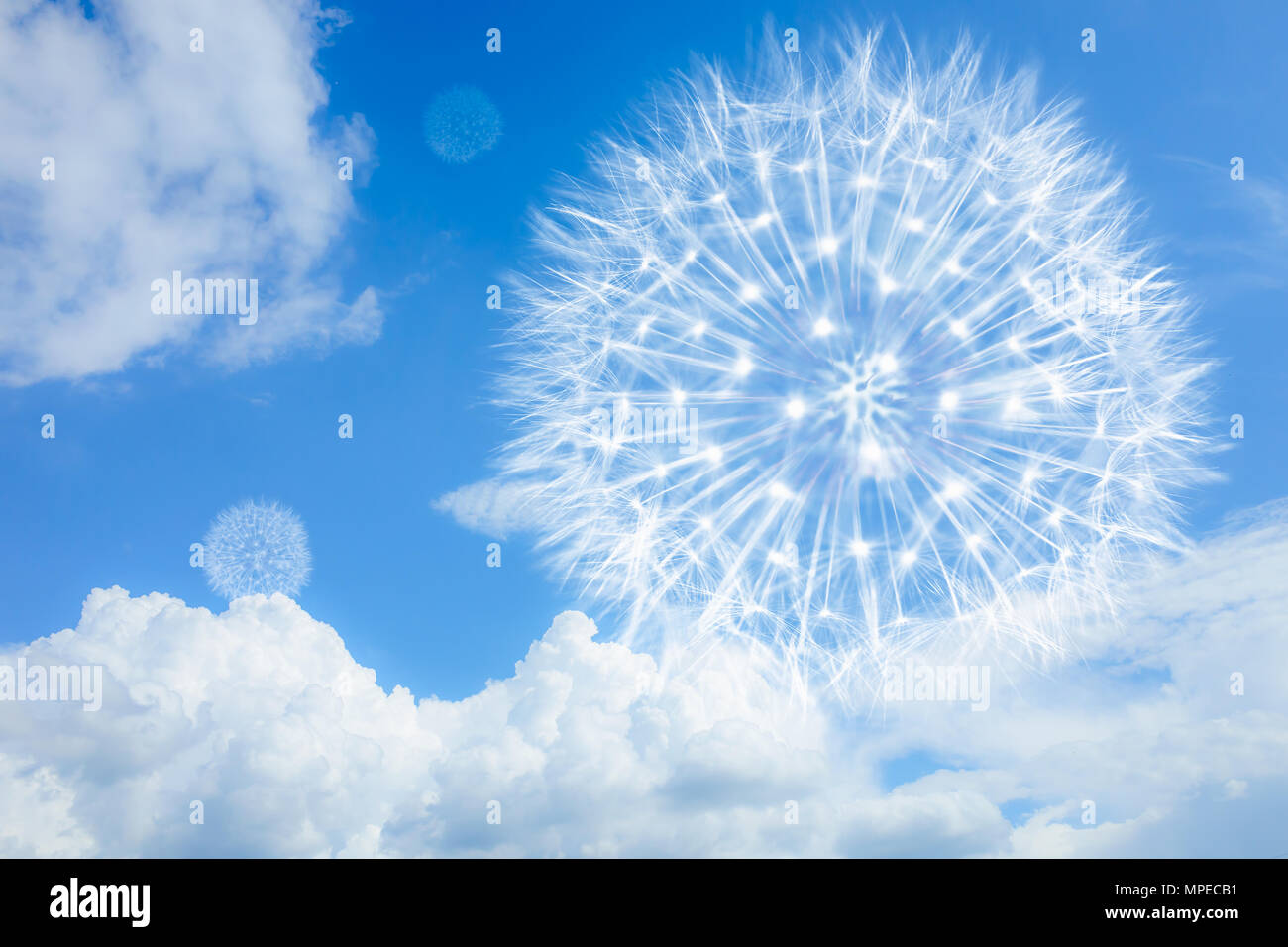 Light And Airy Dandelion On A Blue Background With Clouds