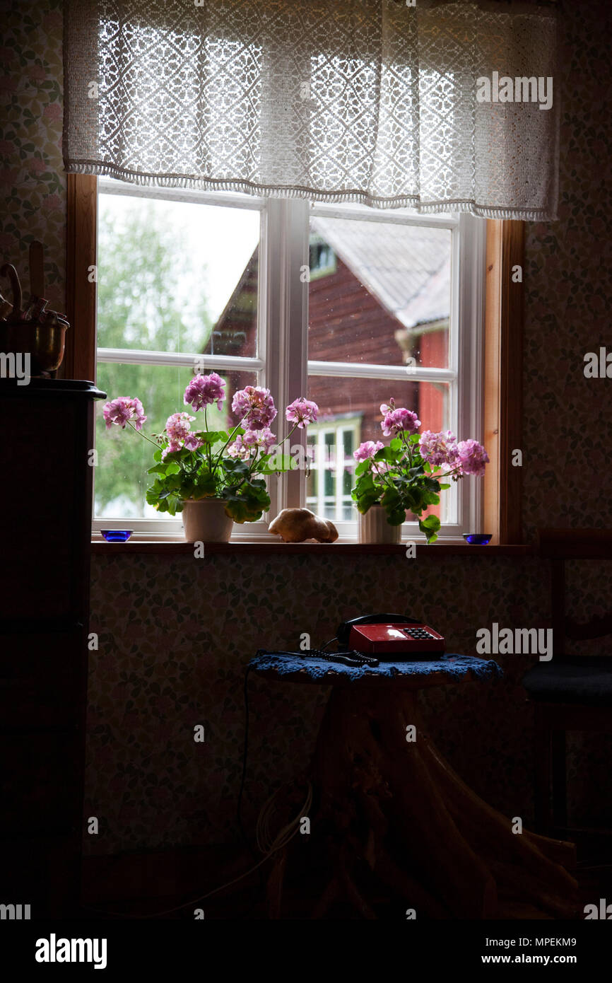 A view from inside and old house in Dalarna Sweden. An old analog phone on a table and flowers in the window. Outside is a classic old red house. - Stock Image