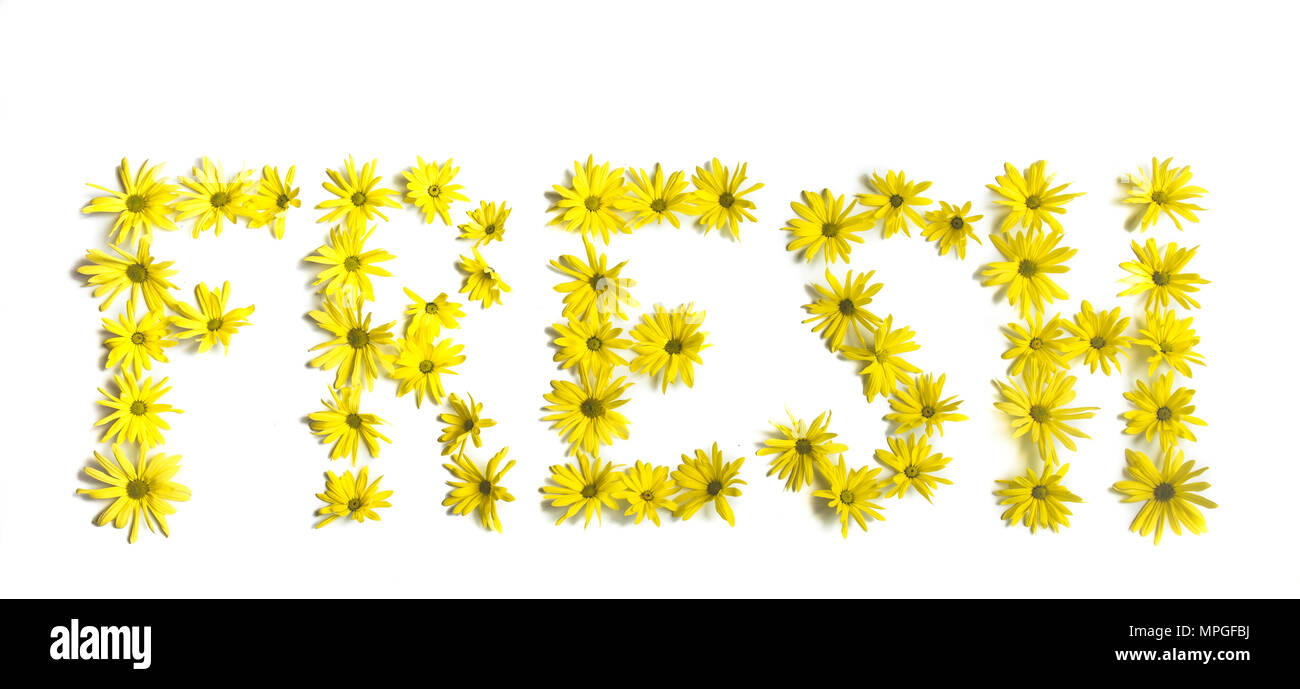 Fresh as a Daisy. Concept of this simile represented as the word FRESH written out in fresh, brilliant yellow daisies. Pure white background. - Stock Image