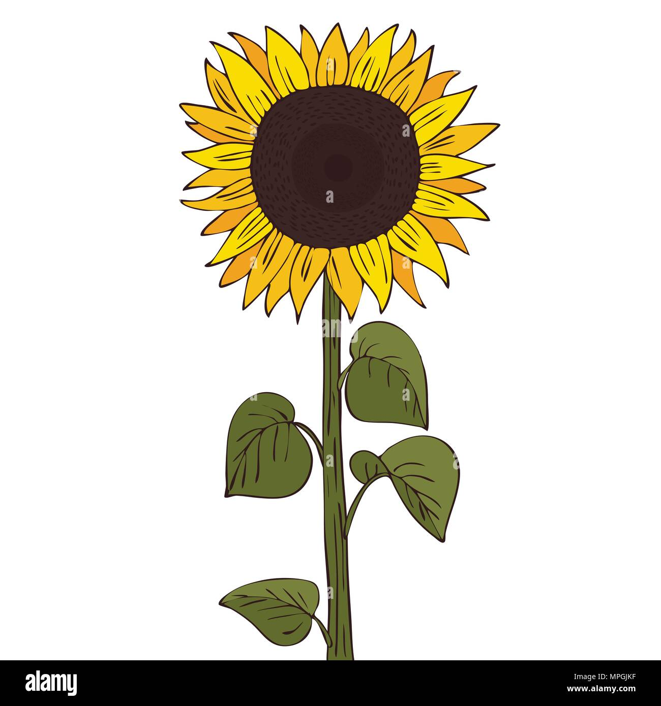 cartoon sunflower stock photos amp cartoon sunflower stock
