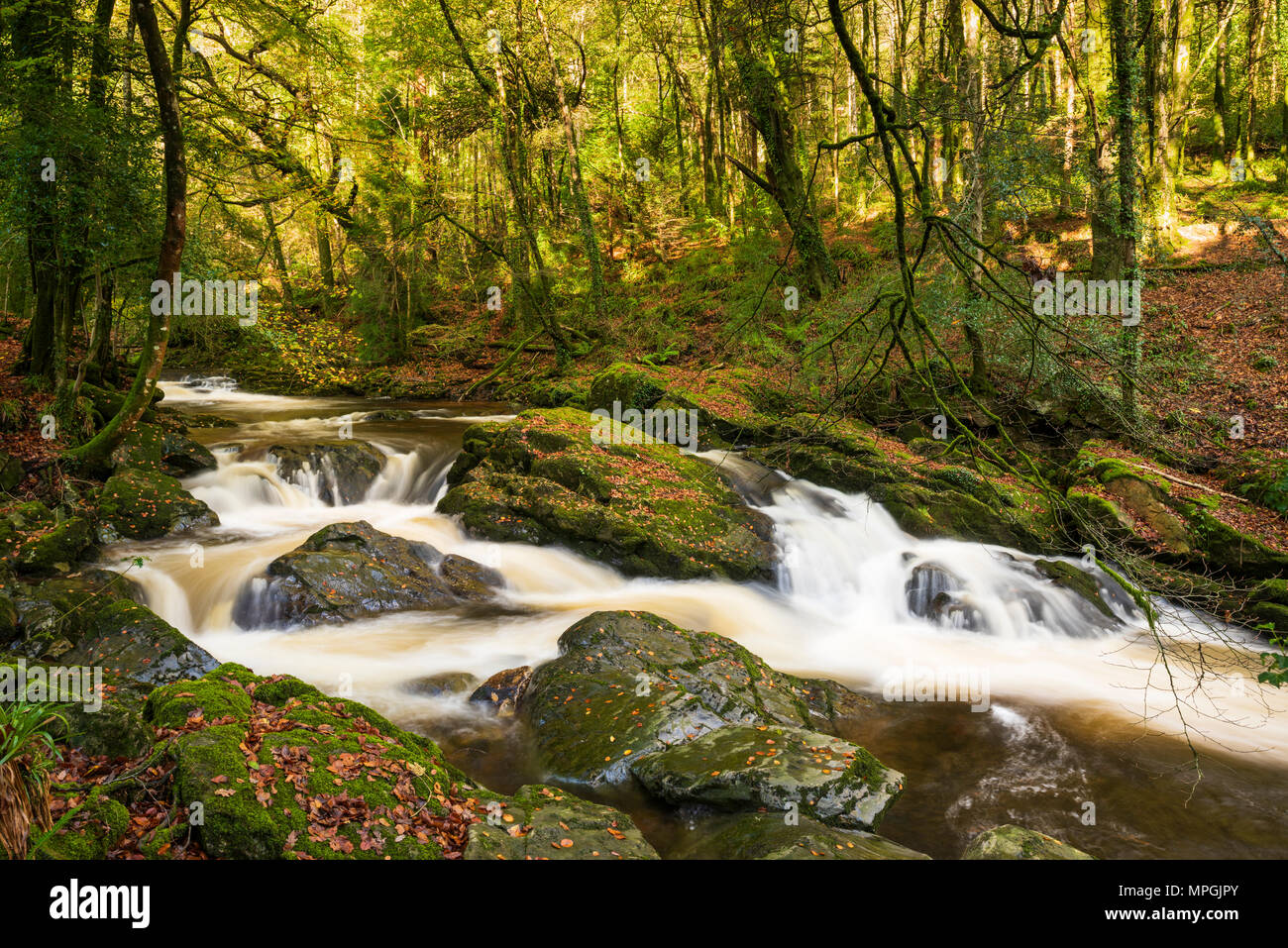 The River Erme flowing though autumn woodland on the edge of the Dartmoor National Park at Ivybridge, Devon, England. - Stock Image