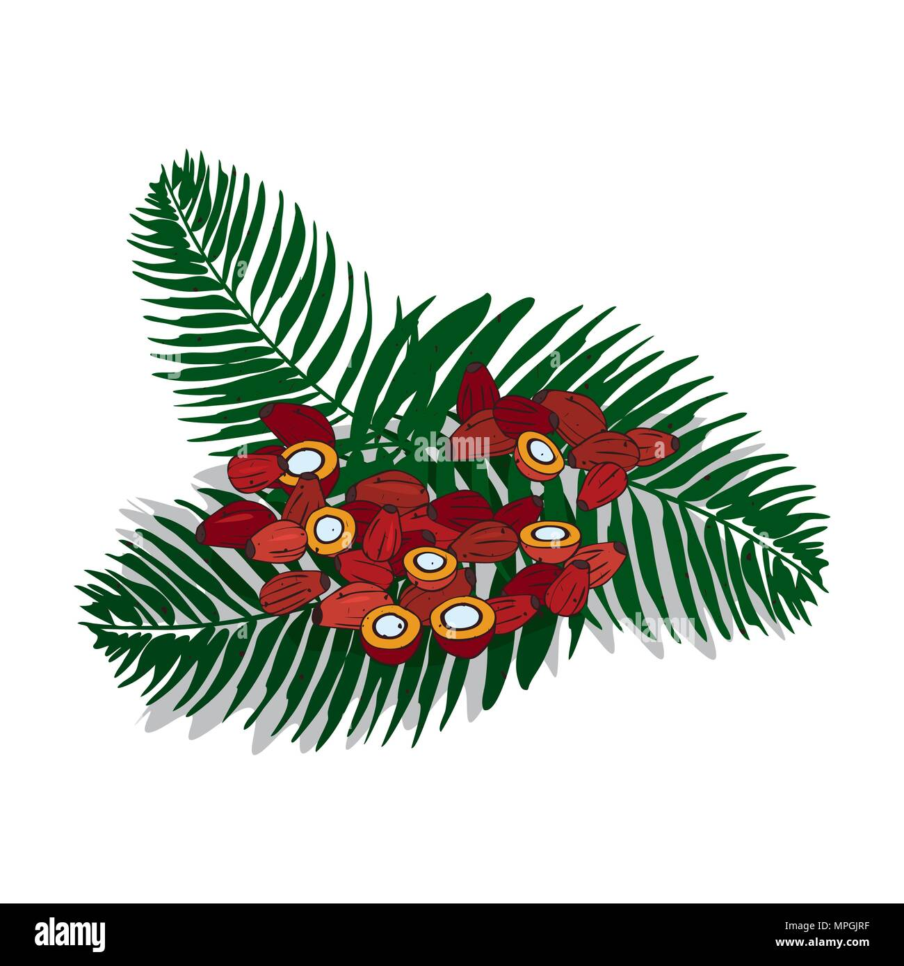 Clip Art Date Fruit Images - Date Fruit Clipart, HD Png Download ,  Transparent Png Image - PNGitem