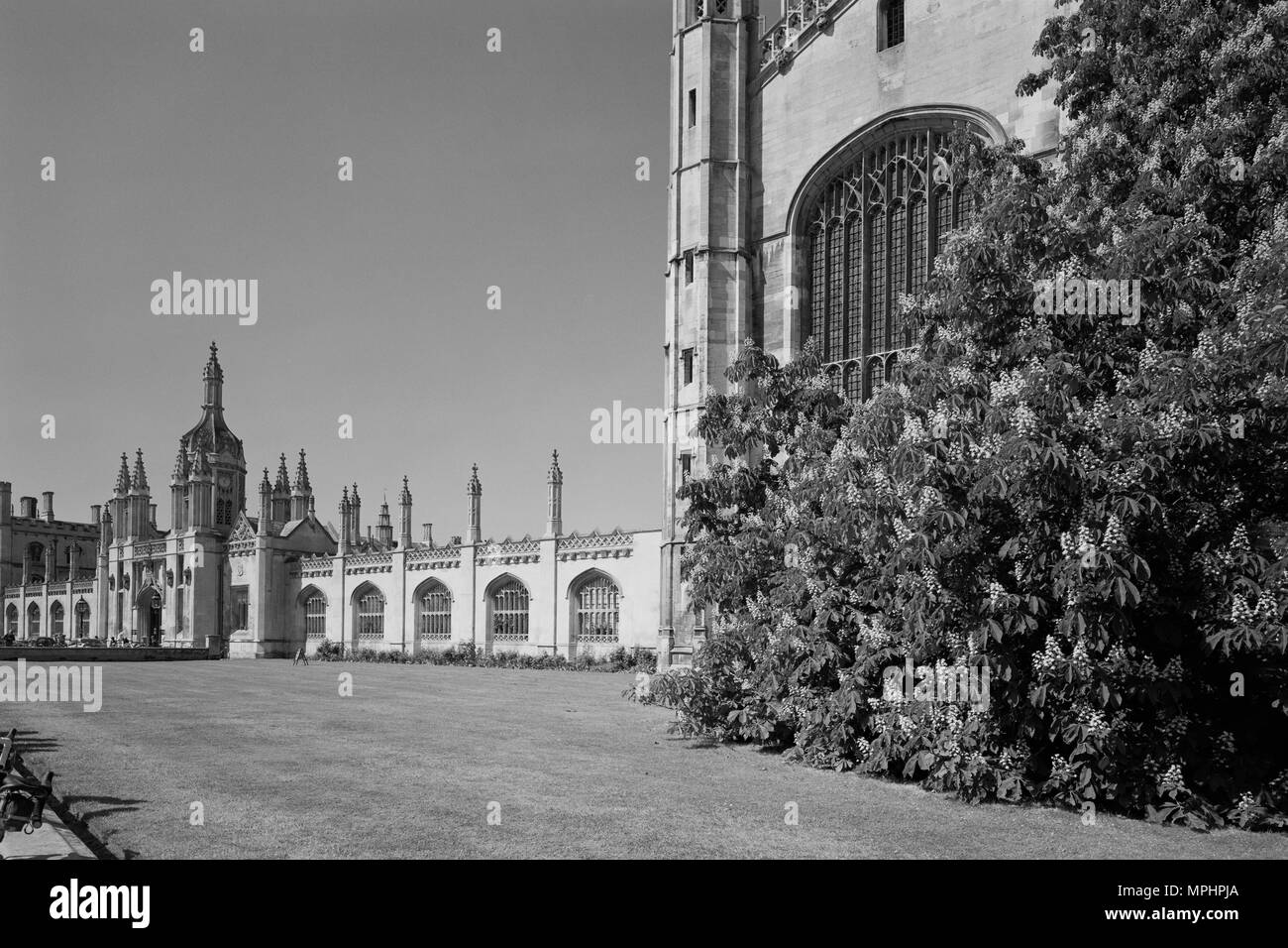 King's College Cambridge on King's Parade - Stock Image