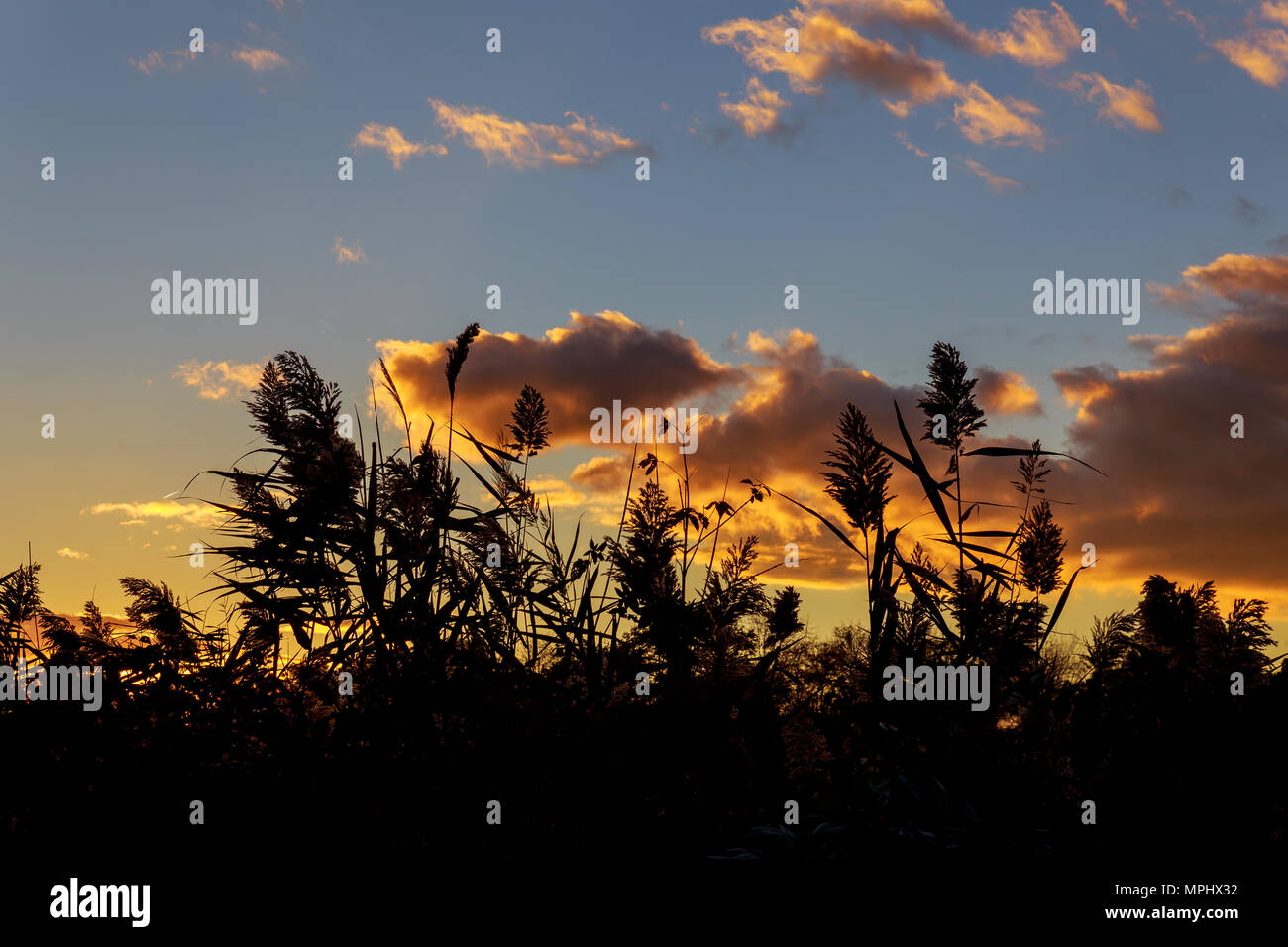 Vast orange speckled clouds form bowl in Autumn sunset sky in semi - Stock Image