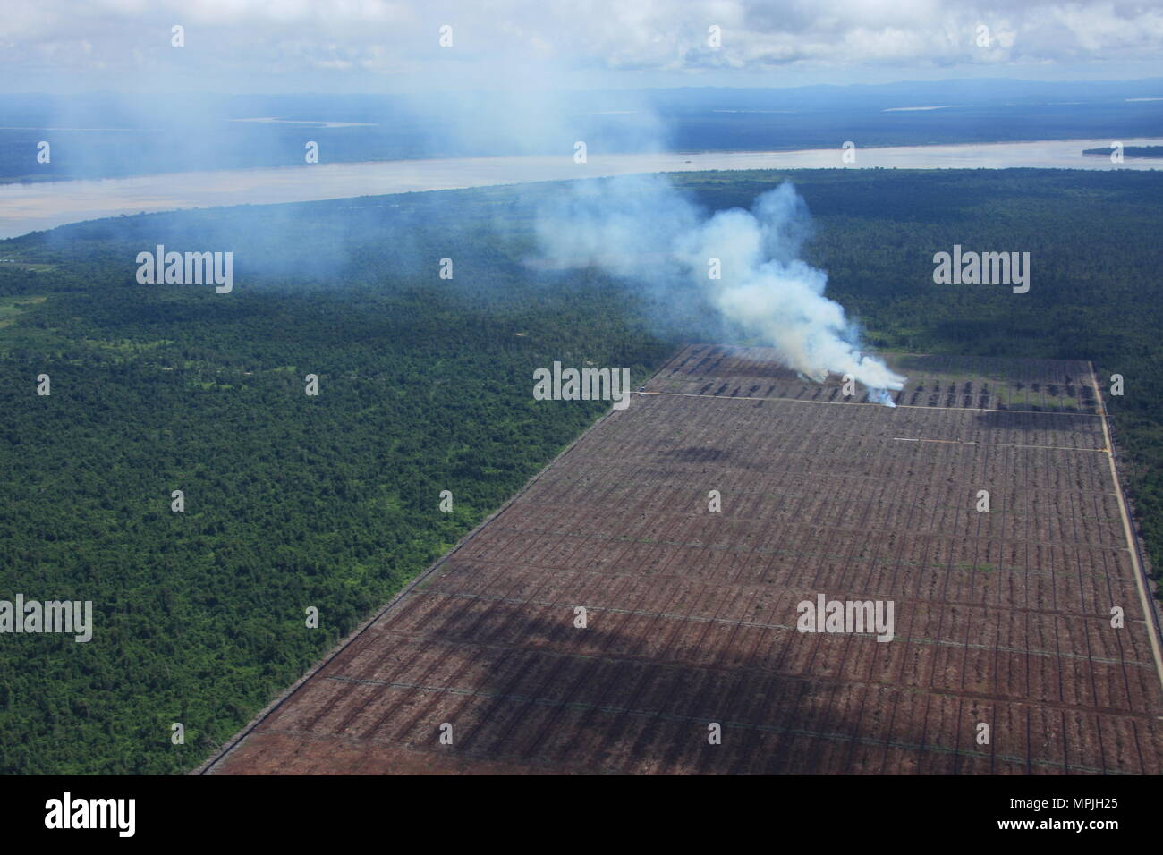 Aerial shots of Sarawak - human impact on the rainforest - deforestation for crops - Stock Image