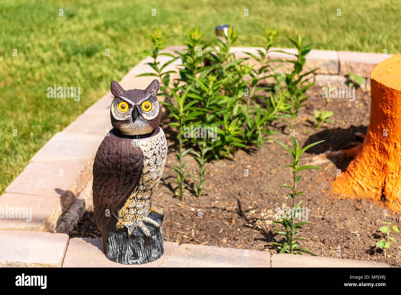 woodsy the decoy owl  protecting the garden plants Stock Photo