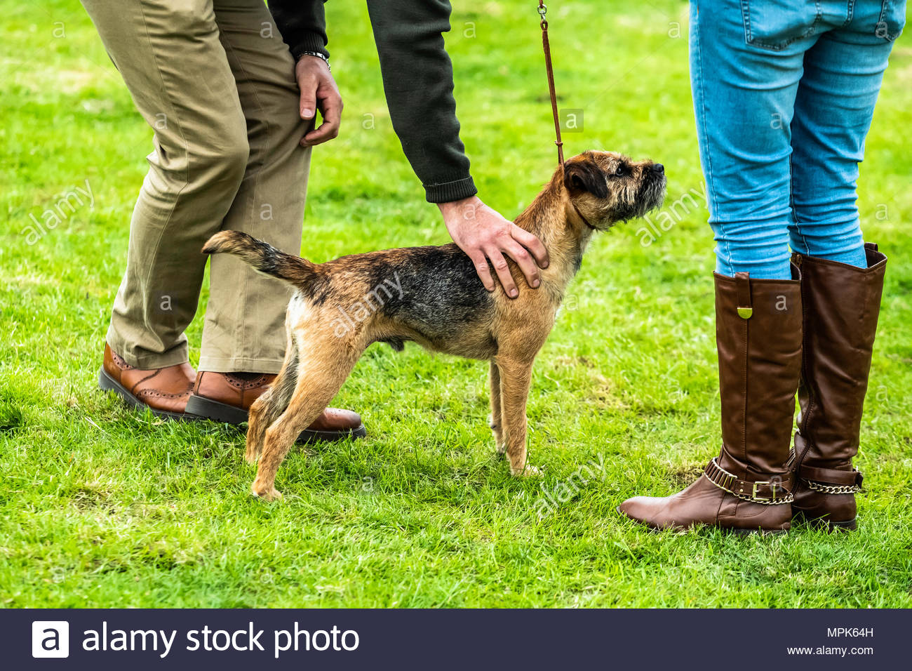 Selkirk, Scottish Borders, UK. 20th May 2018. The Duke of Buccleuch Hunt Terrier and Lurcher Show. The event is a celebration of the working breeds he Stock Photo
