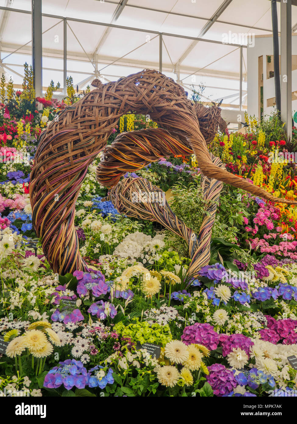 Display roses chelsea flower show stock photos display roses chelsea flower show stock images - Chelsea flower show gold medal winners ...