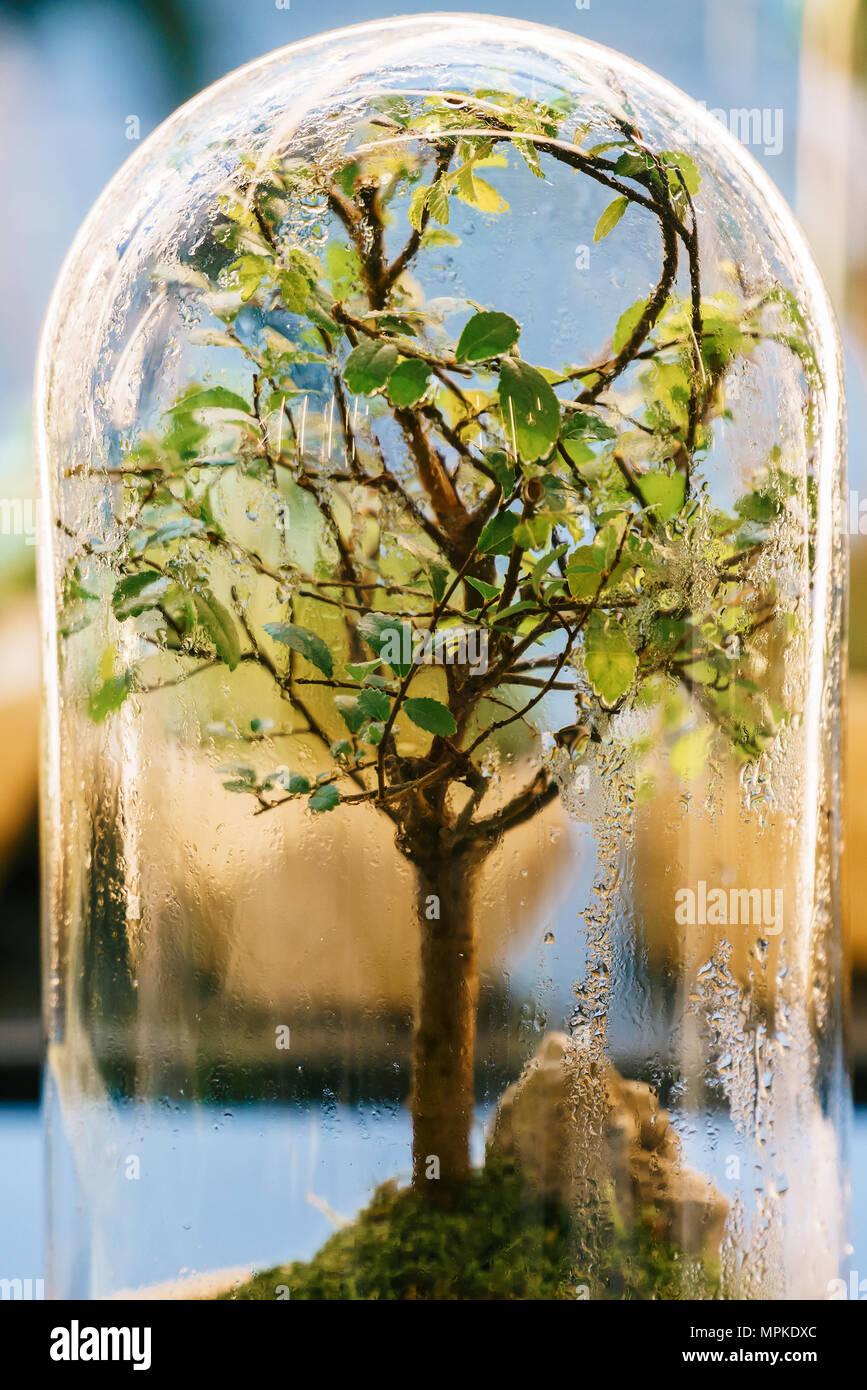 Decorative Bonsai Tree Inside Glass Terrarium Stock Photo 186054132