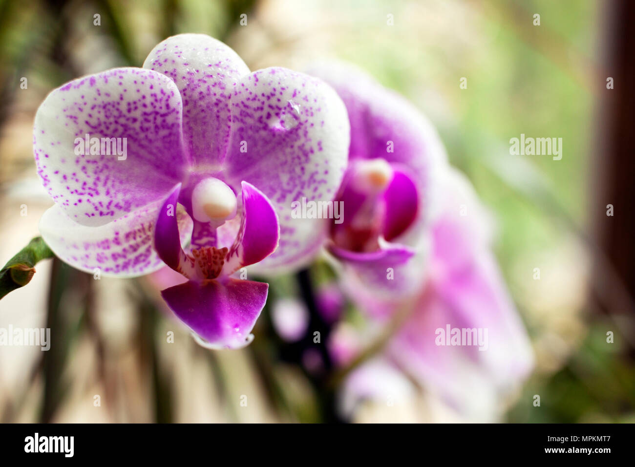 Beautiful Orchid Flowers Decoration Stock Photos Beautiful Orchid