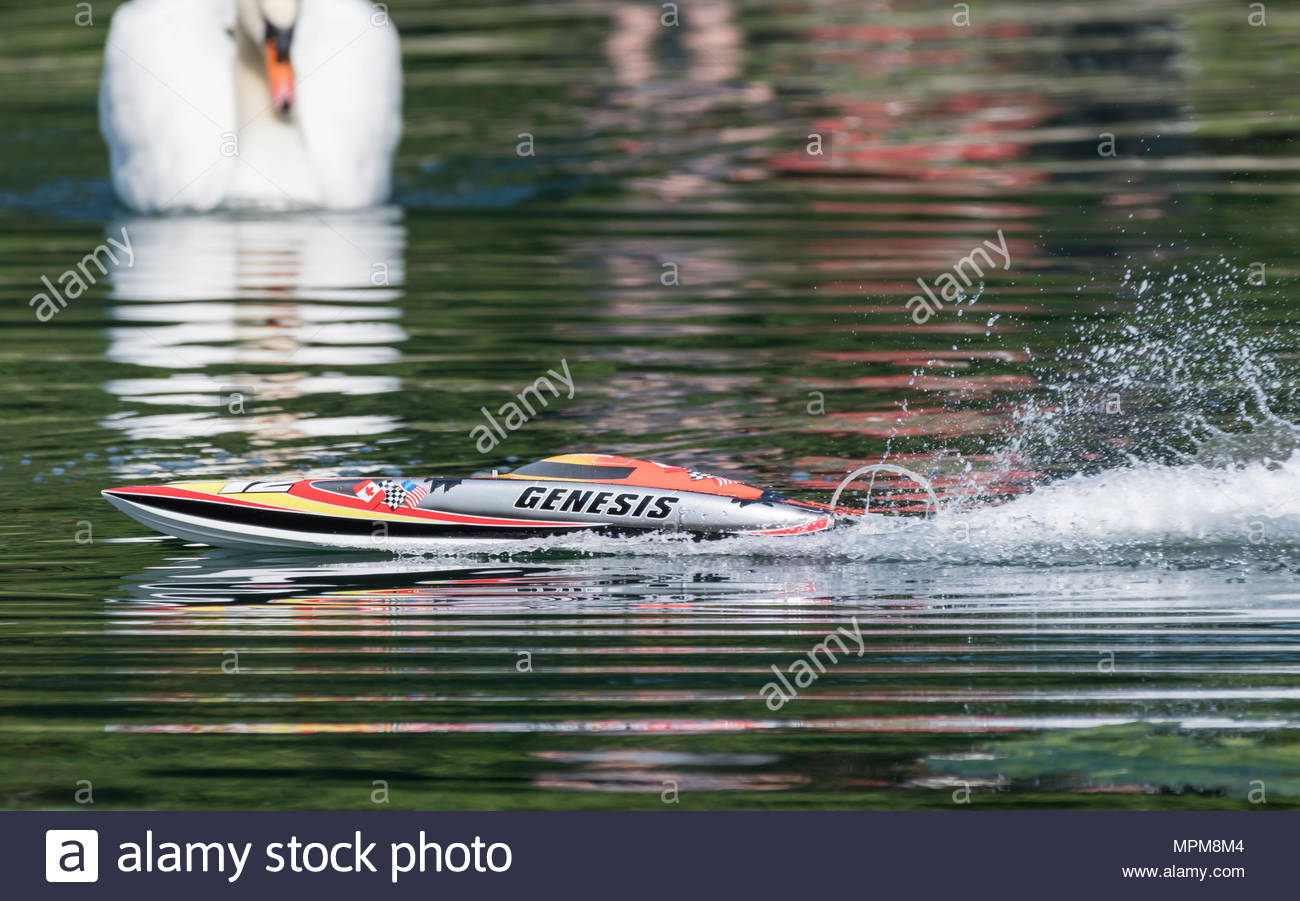 Model radio controlled boat on lake with a swan looking on, disturbed by the remote controlled speedboat. - Stock Image