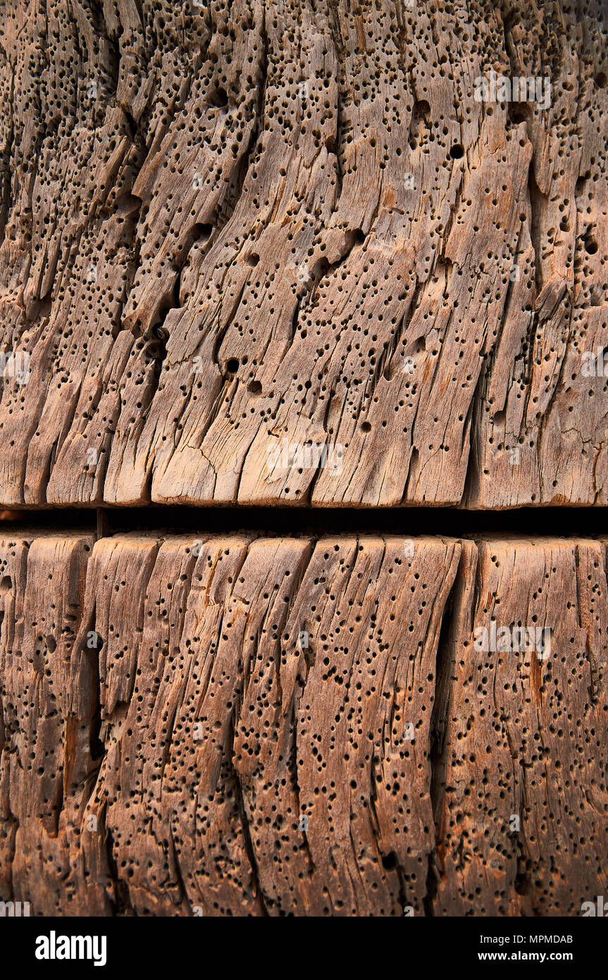 Abstract wood texture of a dry dock with a cut and full of woodworm holes at Caló d'en Trull in Formentera (Balearic Islands, Spain). Conceptual. - Stock Image