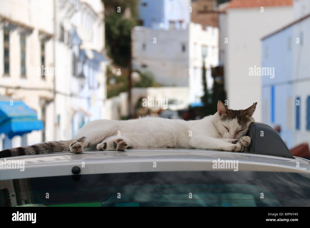 Cat sleeping on the roof of a car - Stock Image