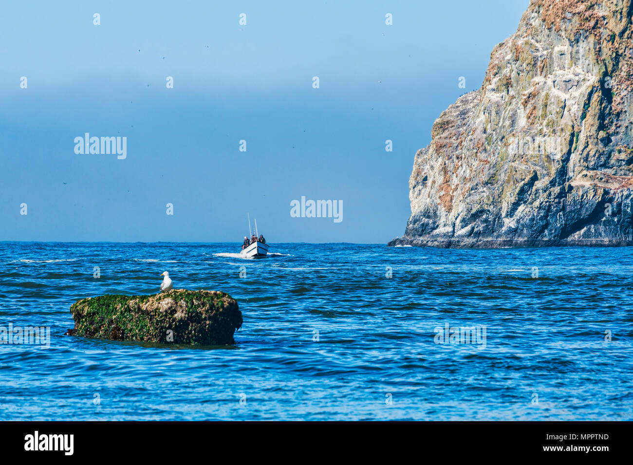Pacific City, Oregon, USA - July 2, 2015: A dory boat passes by Haystack Rock as he makes his approach to land on the beach at Cape Kiwanda - Stock Image