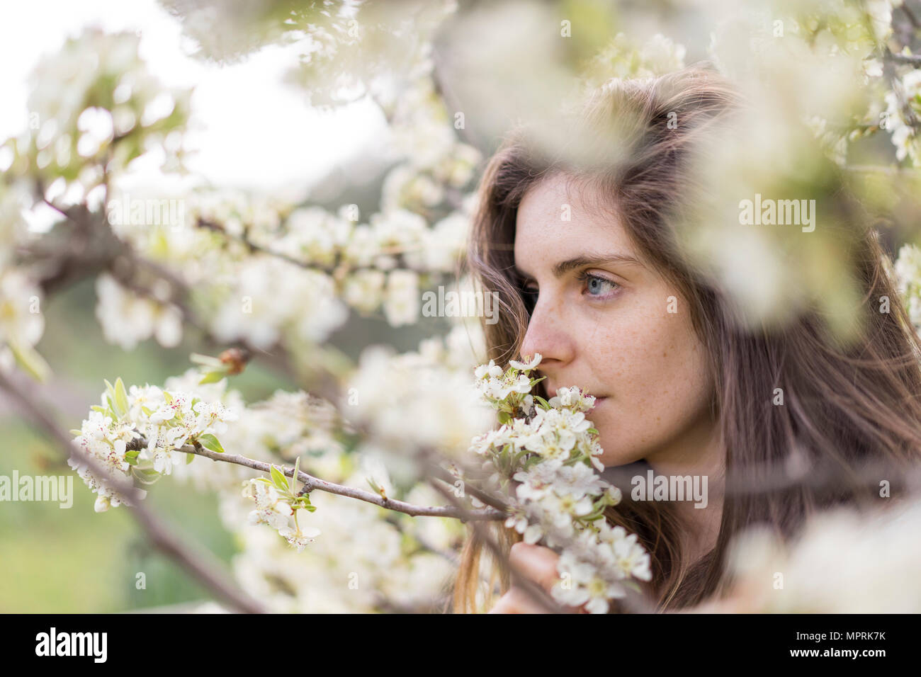Woman smelling white blossoms of fruit tree - Stock Image