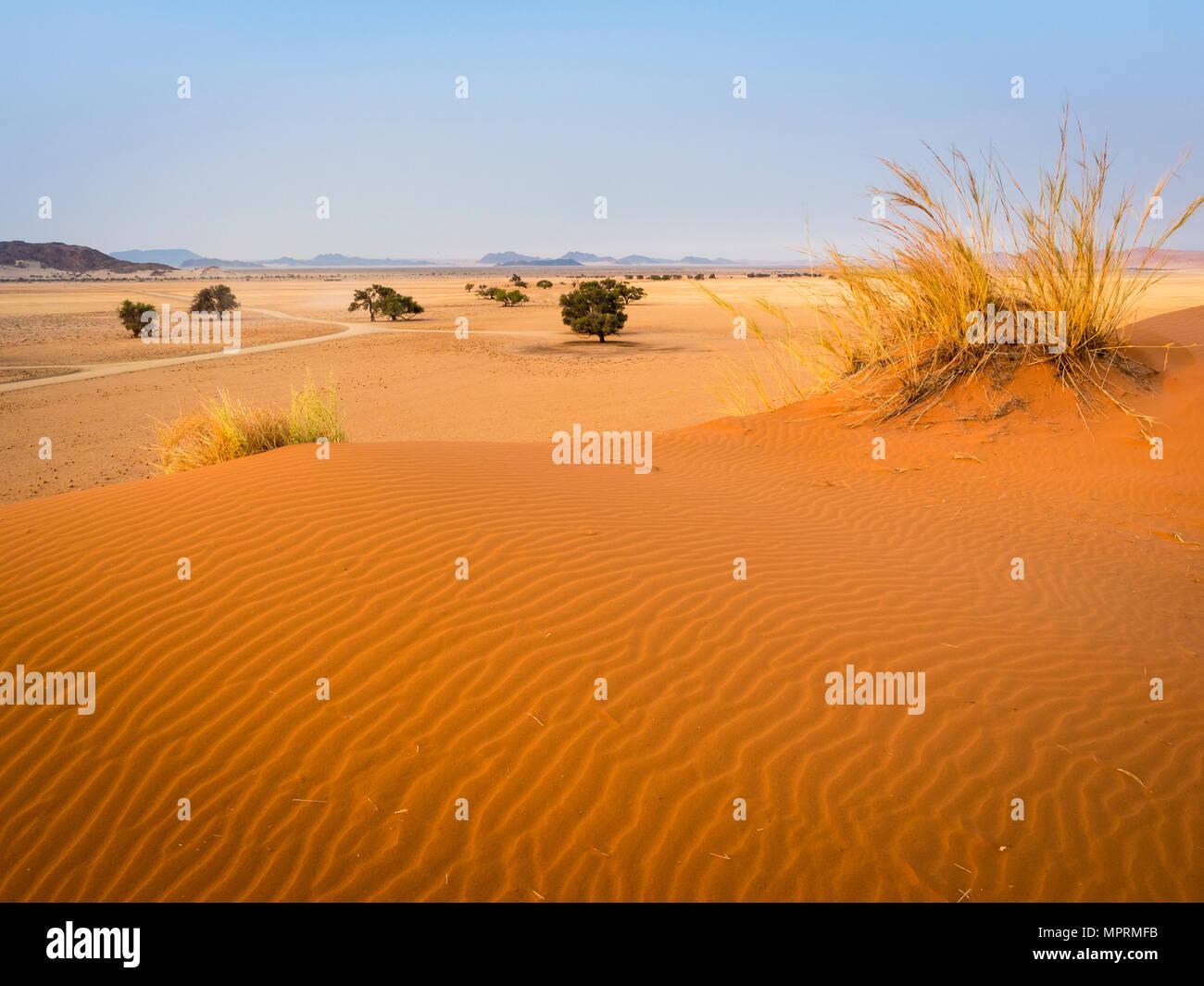 Africa, Namibia, Namib desert, Naukluft National Park, Sossusvlei, Elim dune - Stock Image