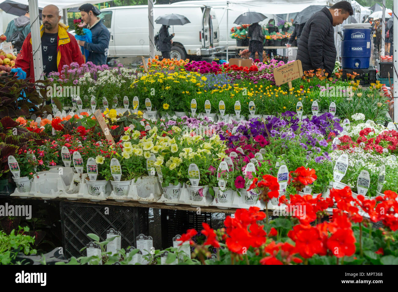 A selection of spring flowers at the union square greenmarket in new a selection of spring flowers at the union square greenmarket in new york on rainy saturday may 19 2018 richard b levine mightylinksfo