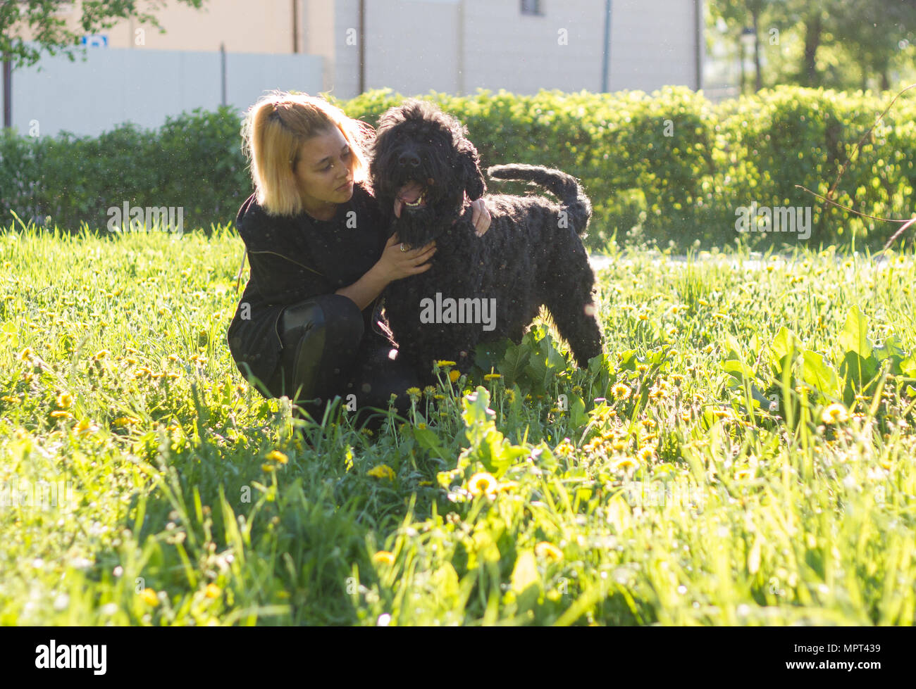 Girl and Russian black Terrier sitting on the grass in the Park - Stock Image