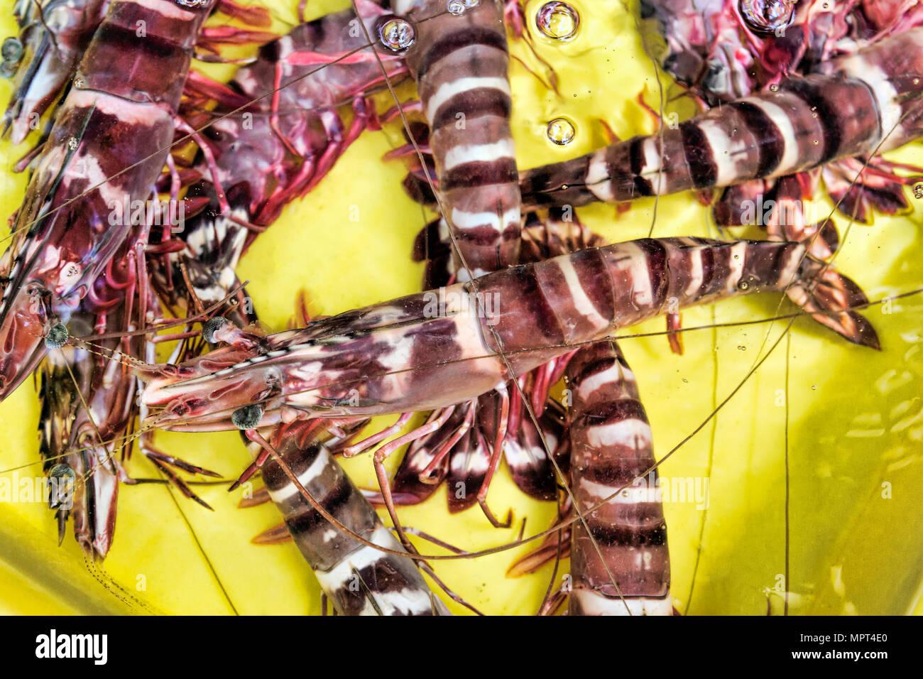Live Shrimp Stock Photos & Live Shrimp Stock Images - Alamy
