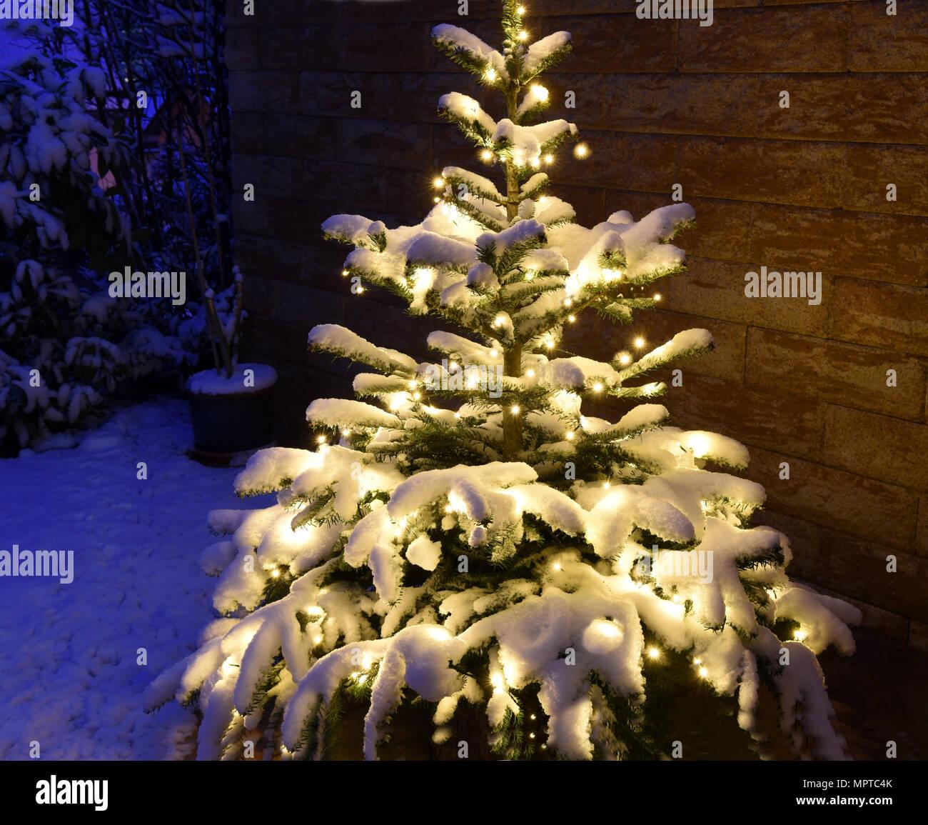 Weihnachtsbaum Tannenbaum.Weihnachtsbaum Tannenbaum Christbaum Stock Photo 186162499 Alamy