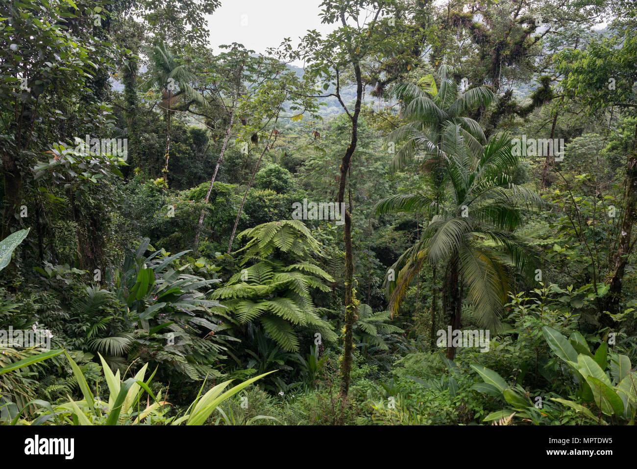 Atlantic Rainforest in SE São Paulo State, Brazil - Stock Image