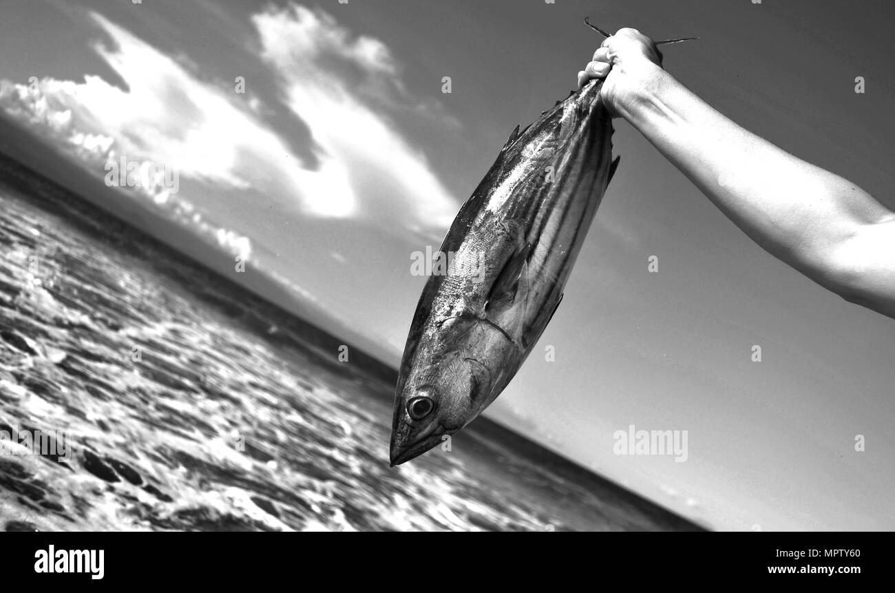catch of the Day, Baler, philippines - Stock Image