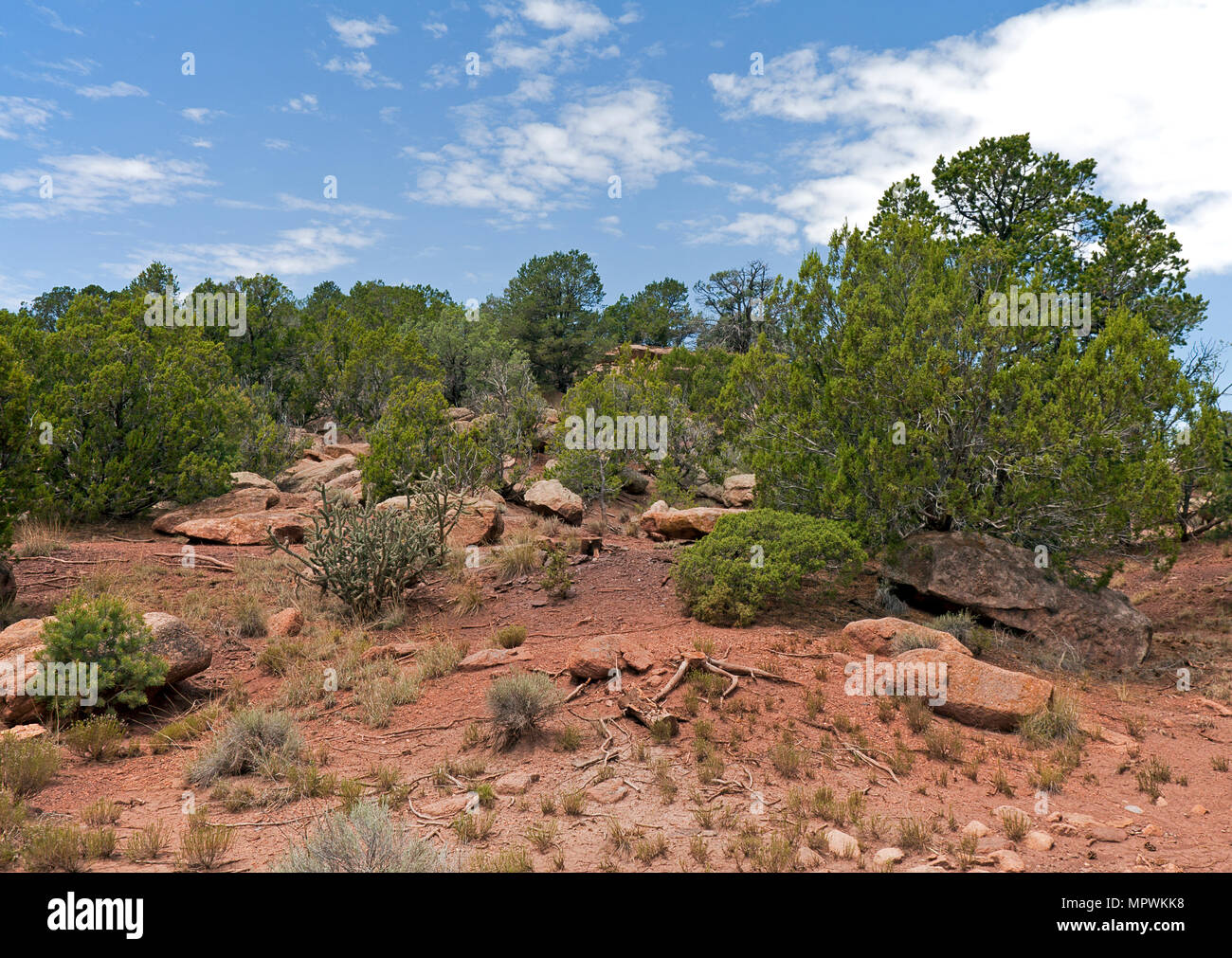 Generic image of American Southwest landscape, with cactus, pinion, juniper, rocks, and pines.  General locale is the highlands of New Mexico in the v - Stock Image