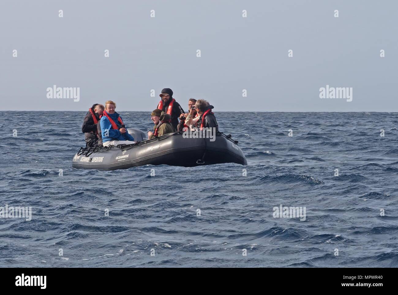 zodiac boat on open sea, passangers watching wildlife  Cape Verde, Atlantic Ocean                May - Stock Image