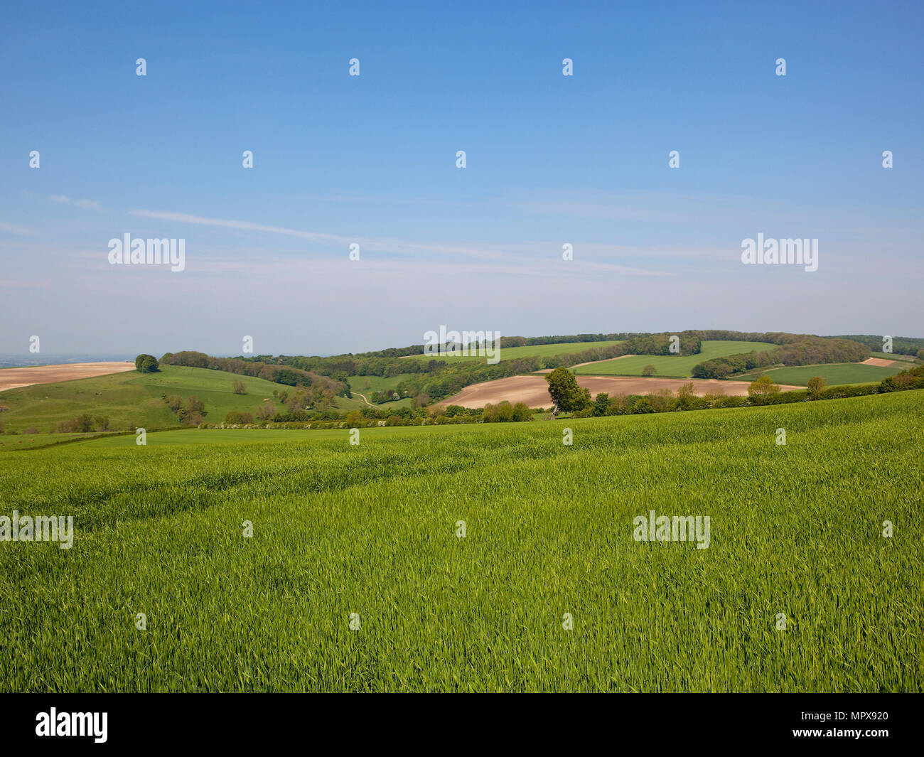 Yorkshire Wolds Springtime crops overlooking patchwork fields with woodland and hedgerows under a blue sky with wispy white cloud - Stock Image