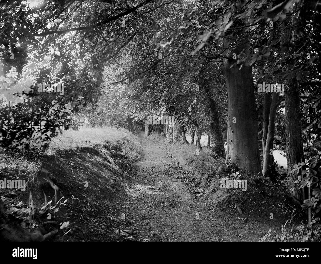 Tree-lined path in the gardens of West Ilsley House, Berkshire, c1860-c1922. Artist: Henry Taunt. Stock Photo