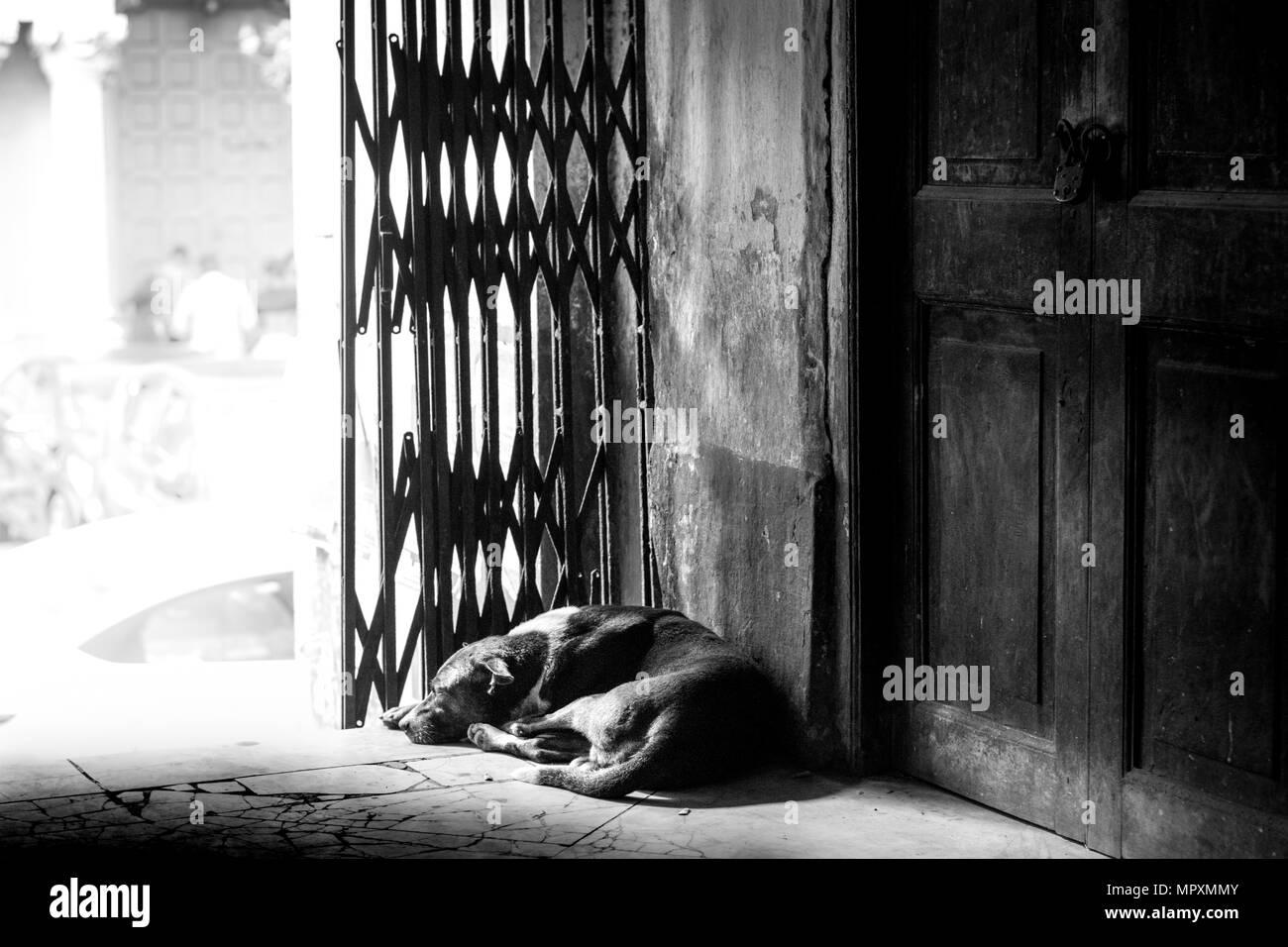 Indian street lifestreet dog stray life street photography kolkata india