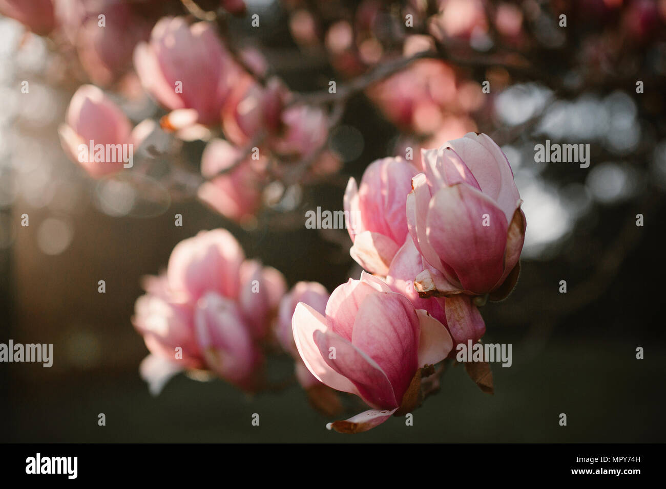 Close-up of flowers growing on tree - Stock Image