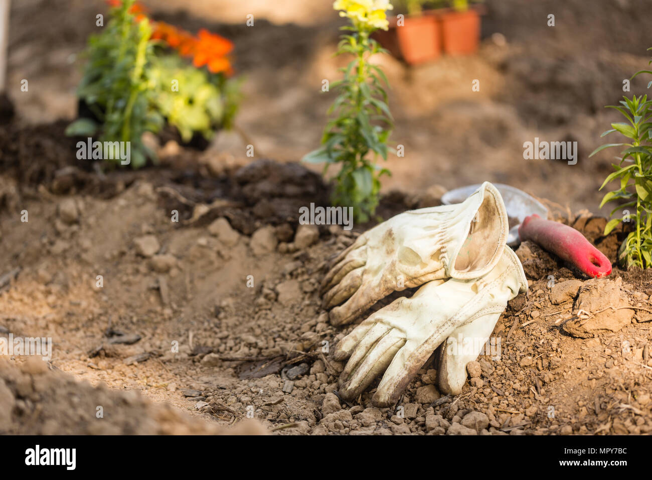 High angle view of gardening gloves with trowel on field at garden - Stock Image