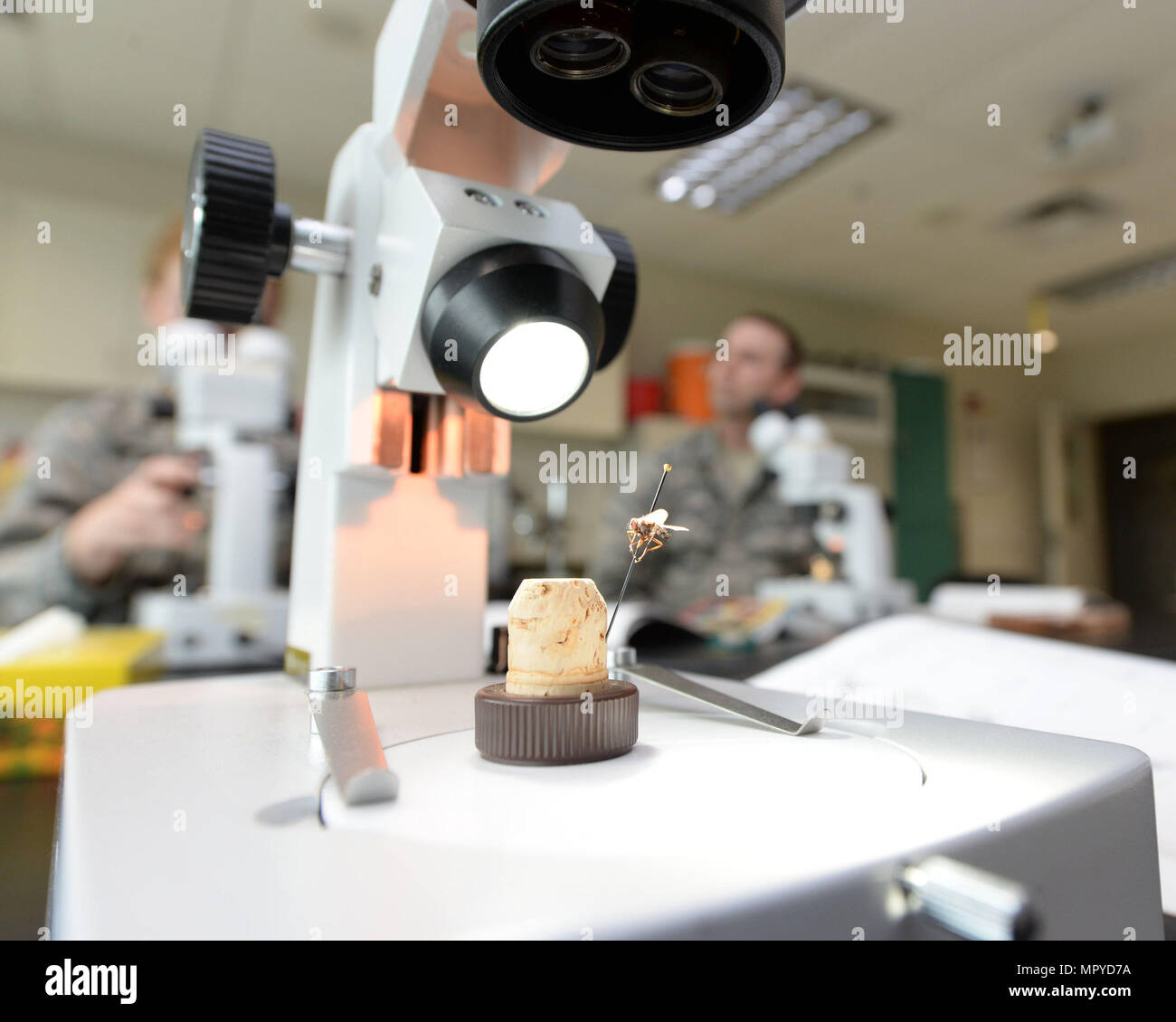 A microscope inside the entomology lab at the 88th Aerospace Medicine Squadron stations a medically significant fly of the family Diptera at Wright-Patterson Air Force Base, Ohio, April 21, 2017. The 88th AMDS students study the mechanical vectors of insects of military importance and the major diseases they transmit. (U.S. Air Force photo by Michelle Gigante/released) - Stock Image