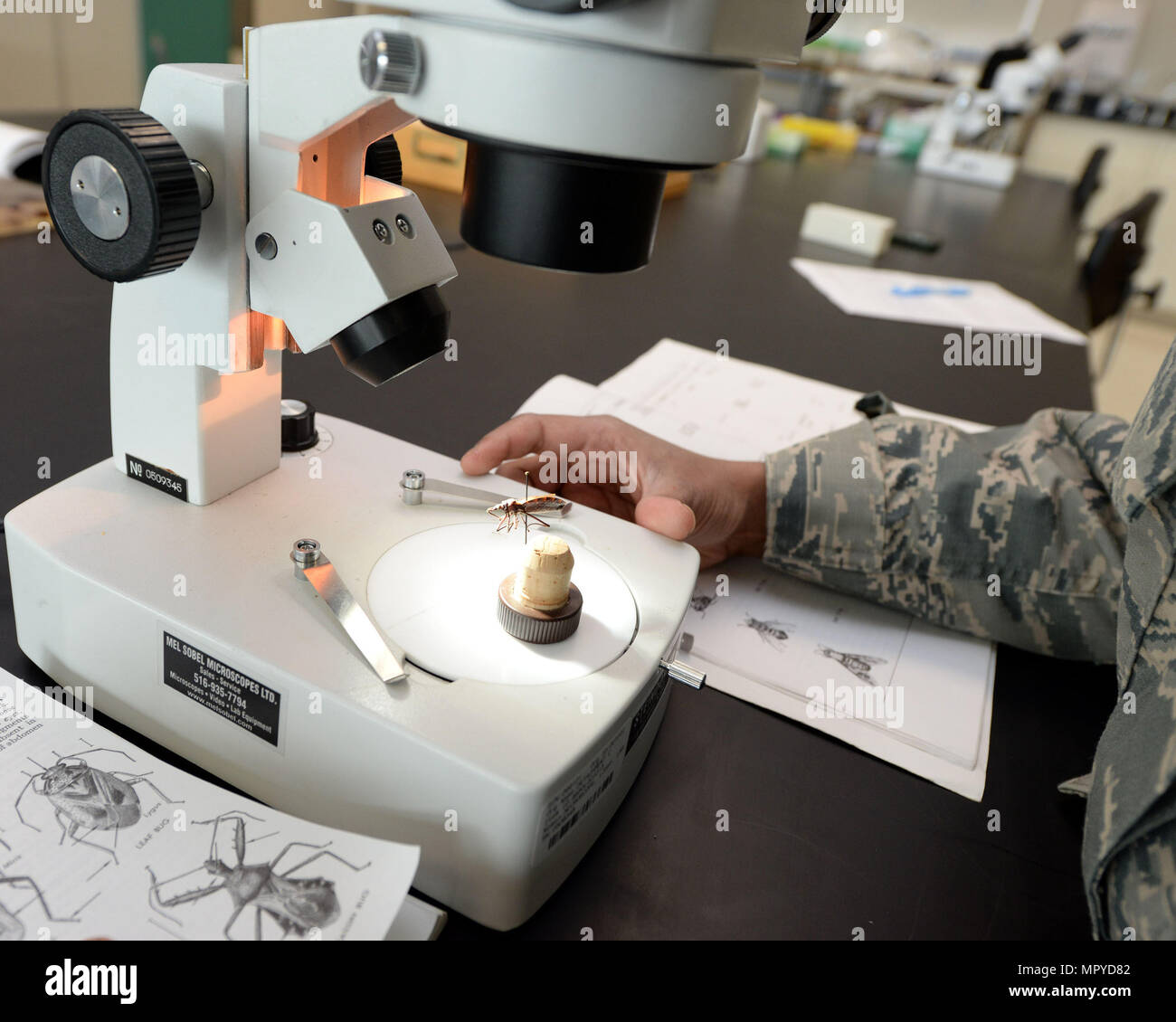 U.S. Air Force Capt. Caroline Brooks, United States Air Force School of Aerospace Medicine Public Health Education Division student, studies a Kissing bug under a microscope inside the entomology lab at the 88th Aerospace Medicine Squadron, Wright-Patterson Air Force Base, Ohio, April 21, 2017. The 88th AMDS students study the mechanical vectors of insects of military importance and the major diseases they transmit. (U.S. Air Force photo by Michelle Gigante/released) - Stock Image